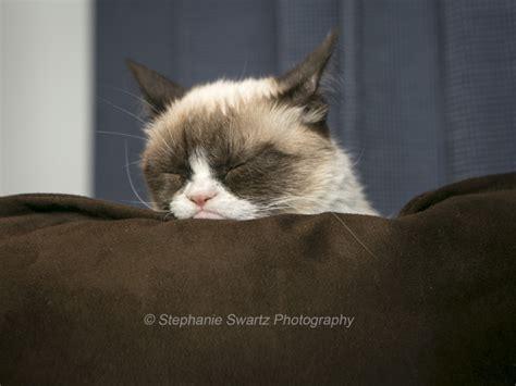 Grumpy Cat Patch grumpy cat draws a crowd hates them santa ca patch