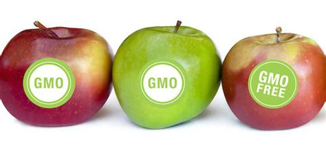 the gmo tipping point health wellness sott net serving its biotech masters fda won t require gmo labeling health wellness sott net