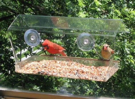 so cool clear bird feeder that attaches to your window