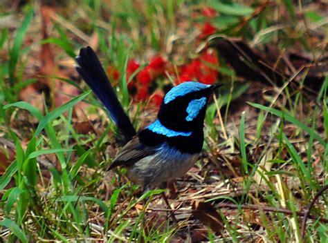 blue birds  cute  elegant incredible cuteness
