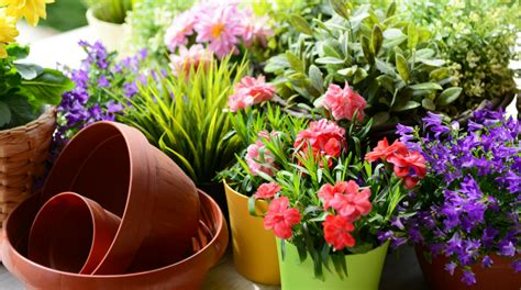 fiori da piantare a marzo quali sono i fiori che puoi piantare ad aprile fito