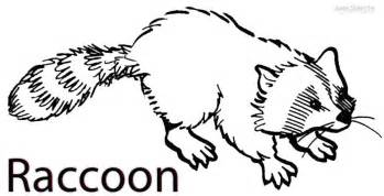 raccoon coloring page printable raccoon coloring pages for cool2bkids