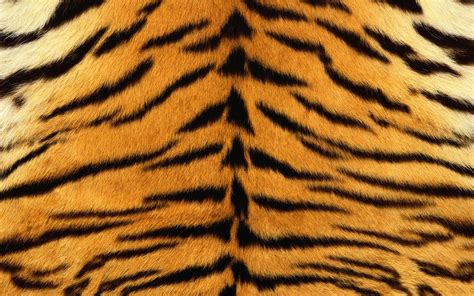 Animal Print Fabric For Upholstery Tiger Fur Background 6942845