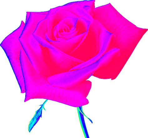 imagenes png tranparentes zoom dise 209 o y fotografia rosas en png con fondo