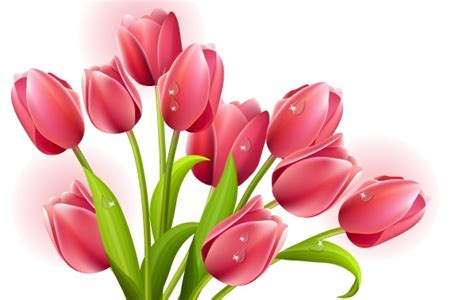 tulips bouquet vector  vector