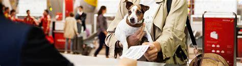 iberia italia uffici in volo con animali al seguito iberia