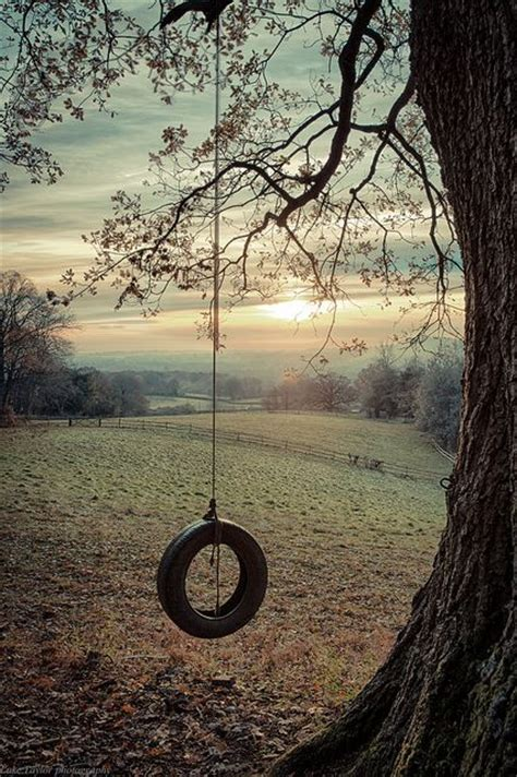 tire swing tree peace tree swings and childhood on pinterest