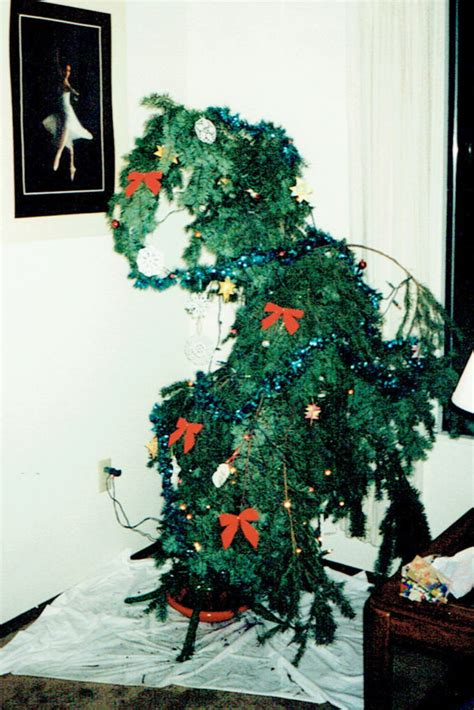 sad looking christmas trees t was the before what really happened and inspiration