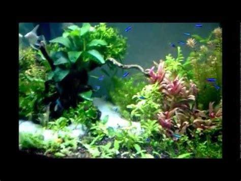 aquarium design chennai nature beauty live aquarium plants in chennai design by