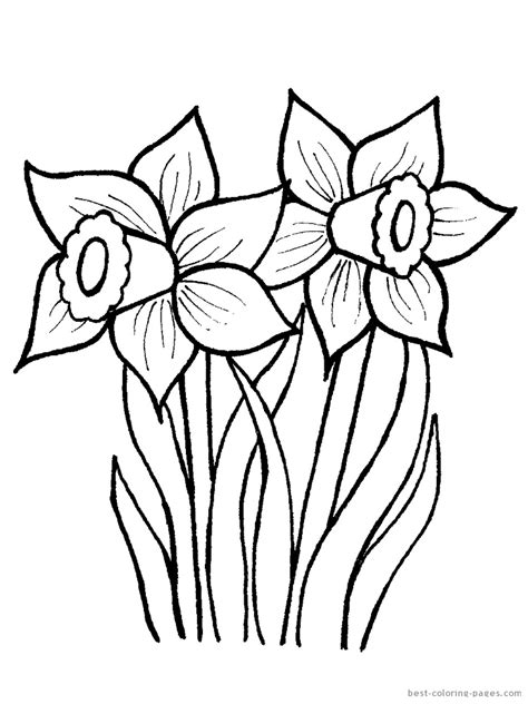 clipart of flowers coloring pages how to draw daffodil flower clipart best