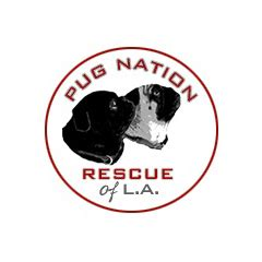 pug rescue california los angeles pug nation rescue of los angeles