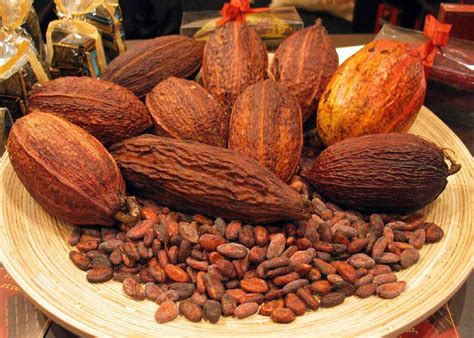 The Cocoa Ghana S Cocoa Industry In Need Of A Fillip Business