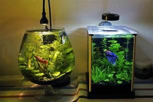 Fauna Aquascape Aqu 225 Rio Redondo Porque N 227 O Usar E 10 Alternativas Mais
