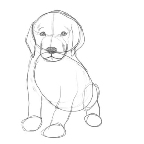 how do you draw a puppy how do you draw a puppy step by step drawing puppy personalbeauty info