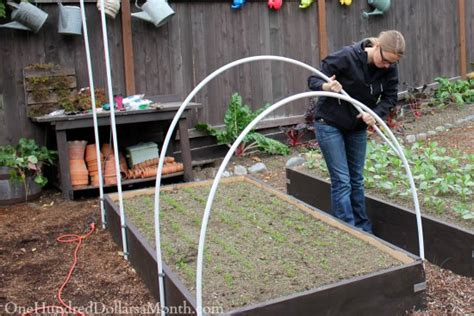 build  small poly tunnel   dollars  month