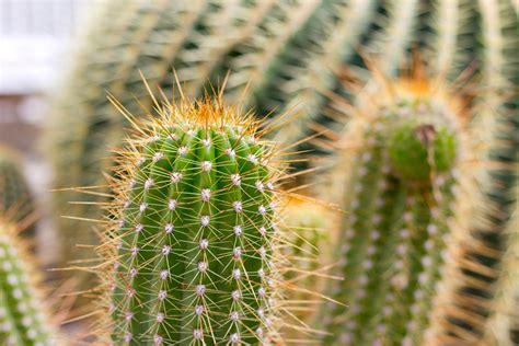 Pilze Botanischer Garten by Kakten Im Botanischen Garten M 252 Nchen Foto Bild