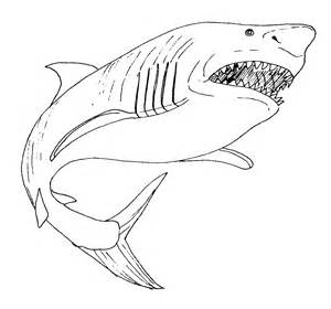 Great White Shark Coloring Page great white shark coloring page coloring pages printable 9356 bestofcoloring