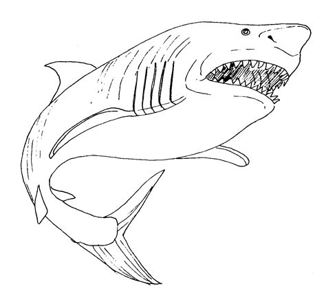 great white shark coloring page coloring pages printable