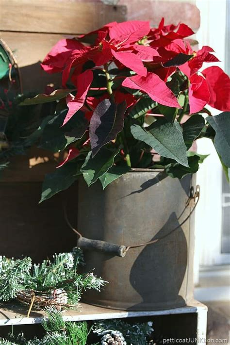christmas porch decorations with live poinsettias