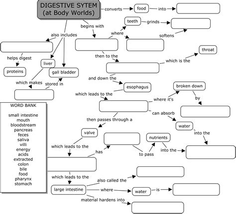 Systems Chart Worksheet Answers by World Digestive System Science Class