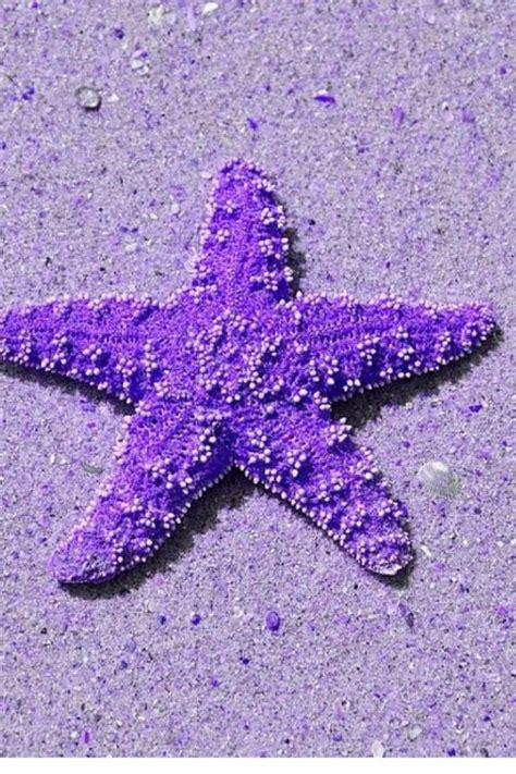 color purple sa prevodom les 25 meilleures id 233 es de la cat 233 gorie etoile des lilas
