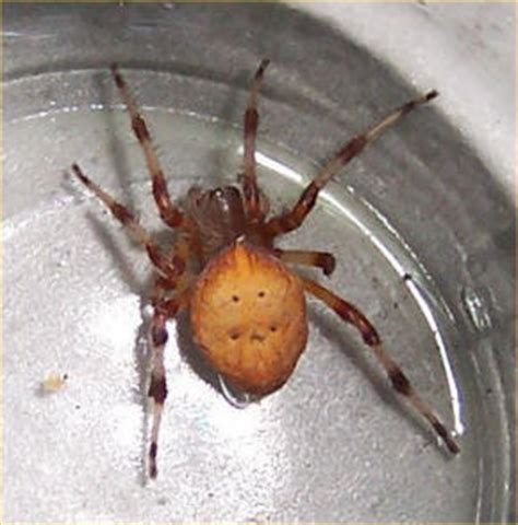 Garden Spider Utah Spiders At Spiderzrule The Best Site In The World About