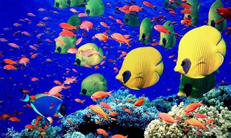 www fish live wallpaper free 3d hd live fish wallpapers apk for android