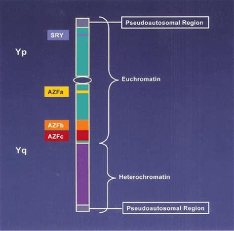 Ramayya Pramila Urology Hospital: SERTOLI CELL ONLY ... Y Chromosome Microdeletion