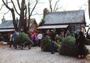 christmas tree farms near indianapolis 8 places to buy a tree in indianapolis menchhofer tree care