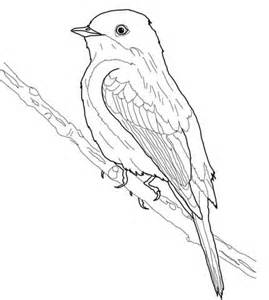 eastern phoebe coloring page free printable coloring pages