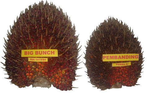 Bibit Sawit Unggul bibit kelapa sawit jual bibit kelapa sawit unggul