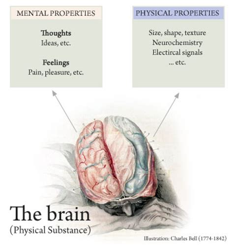 i am not a brain philosophy of mind for the 21st century books property dualism philosophy index