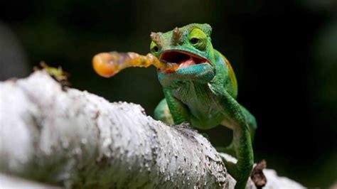 imagenes navideñas las mejores las mejores fotos de animales y vida salvaje de 2014 tele 13