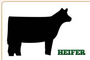Show Heifer Outline by Shop