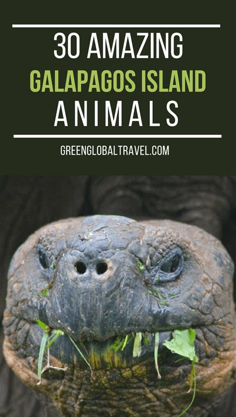 7 Amazing Animals From The Galapagos Islands by 30 Amazing Galapagos Islands Animals