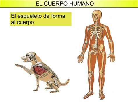 el cuerpo humano que el cuerpo humano
