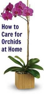 orchid care on pinterest orchid flowers orchids and longwood gardens
