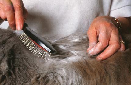 was tun wenn die katze in die wohnung pinkelt was tun wenn die katze stark haart ursachen f 252 r das