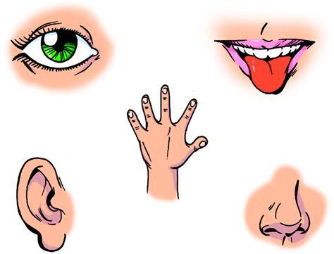 imagenes de organos sensoriales los sentidos mayo 2014