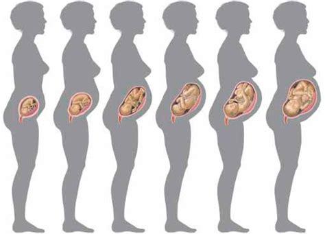 deuxi 232 me mois de grossesse premiers maux de femme