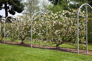 Fruit Tree Trellis R 233 Aliser Un Palissage Pour Des Fruitiers Ma Passion Du