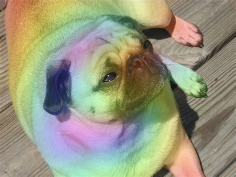 rainbow pug pin tag minecraft animation on