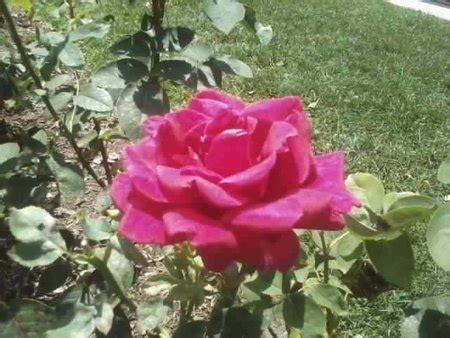 natural skin care 9 ways to use rose water for beautiful skin 8 divinely delicious ways to use roses in skin care