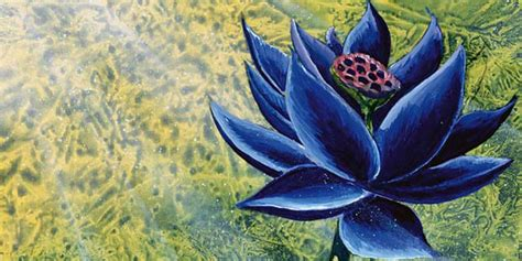 black lotus an interview with christopher rush a pioneering artist