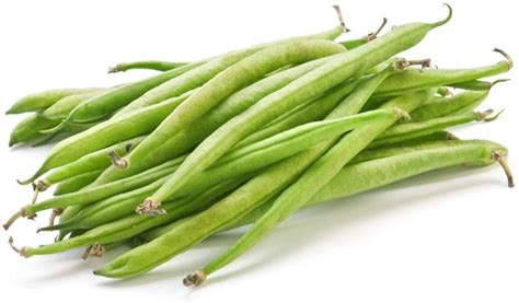 Recolte Haricot Vert by Haricot Phaseolus Vulgaris Semis R 233 Colte Culture