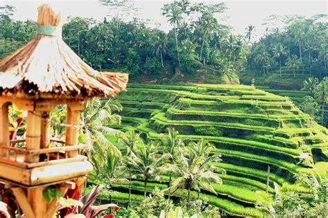 Lukisan Pemandangan Rumah Desa Klasik 1 prachtige foto een rijstterras op bali tijdens een