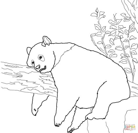 coloring page of giant panda coloriage panda g 233 ant coloriages 224 imprimer gratuits