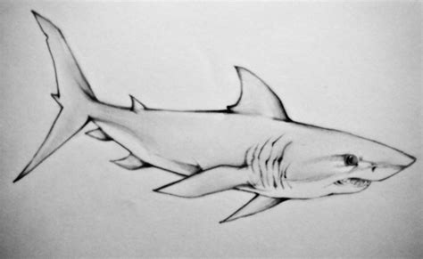 57 popular shark tattoos and designs