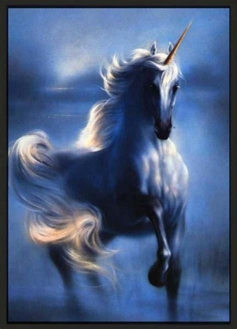 unicornios en imagenes image gallery unicornios reales