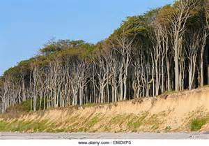 nienhagen germany trees nienhagen germany trees newhairstylesformen2014 com